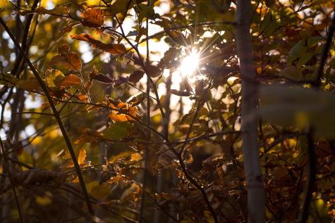 The Fall Season