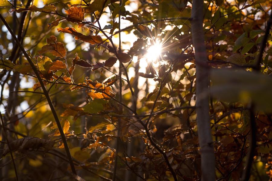 The+Fall+Season